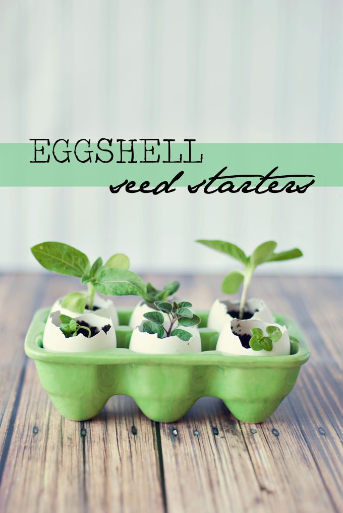 Eggshell Seed Starters by Three in Three | A super easy way to get that garden growing, plus the eggshells act as fertilizer!